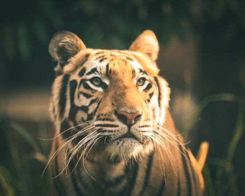 animal-photographer14