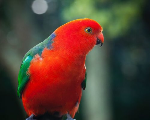 animal-photographer15