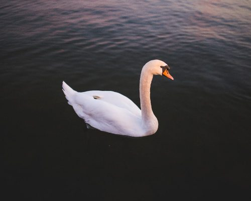 animal-photographer22