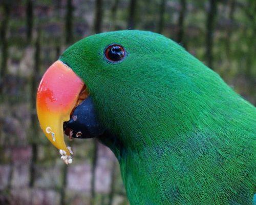 animal-photographer24